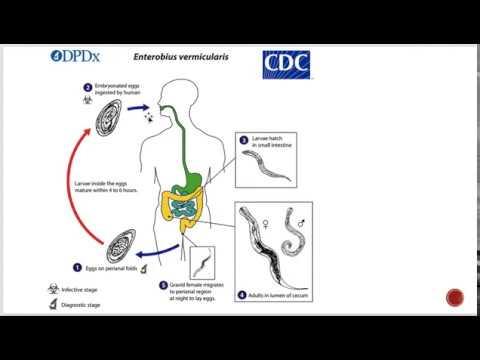 enterobiasis geohelminthiasis)