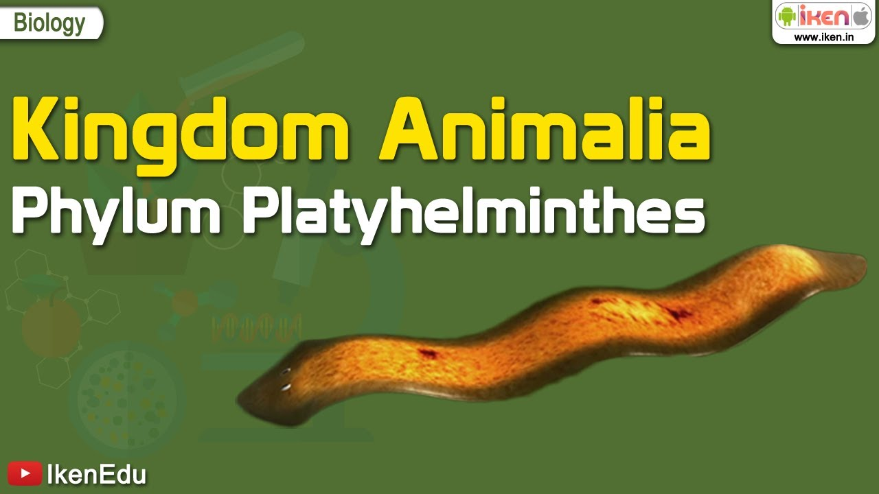 Phylum aschelminthes kép