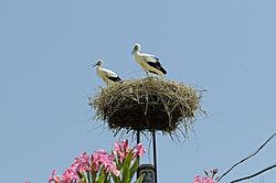 gólyák parazitái