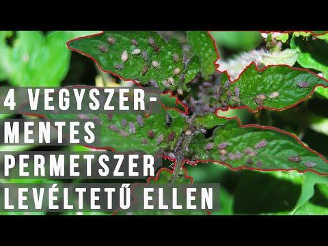 Gyógynövények gyűjtése a parazitákból a gyógyszertárban