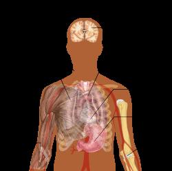 Paraziták az emberi testben a tüdőben. Trichuriasis