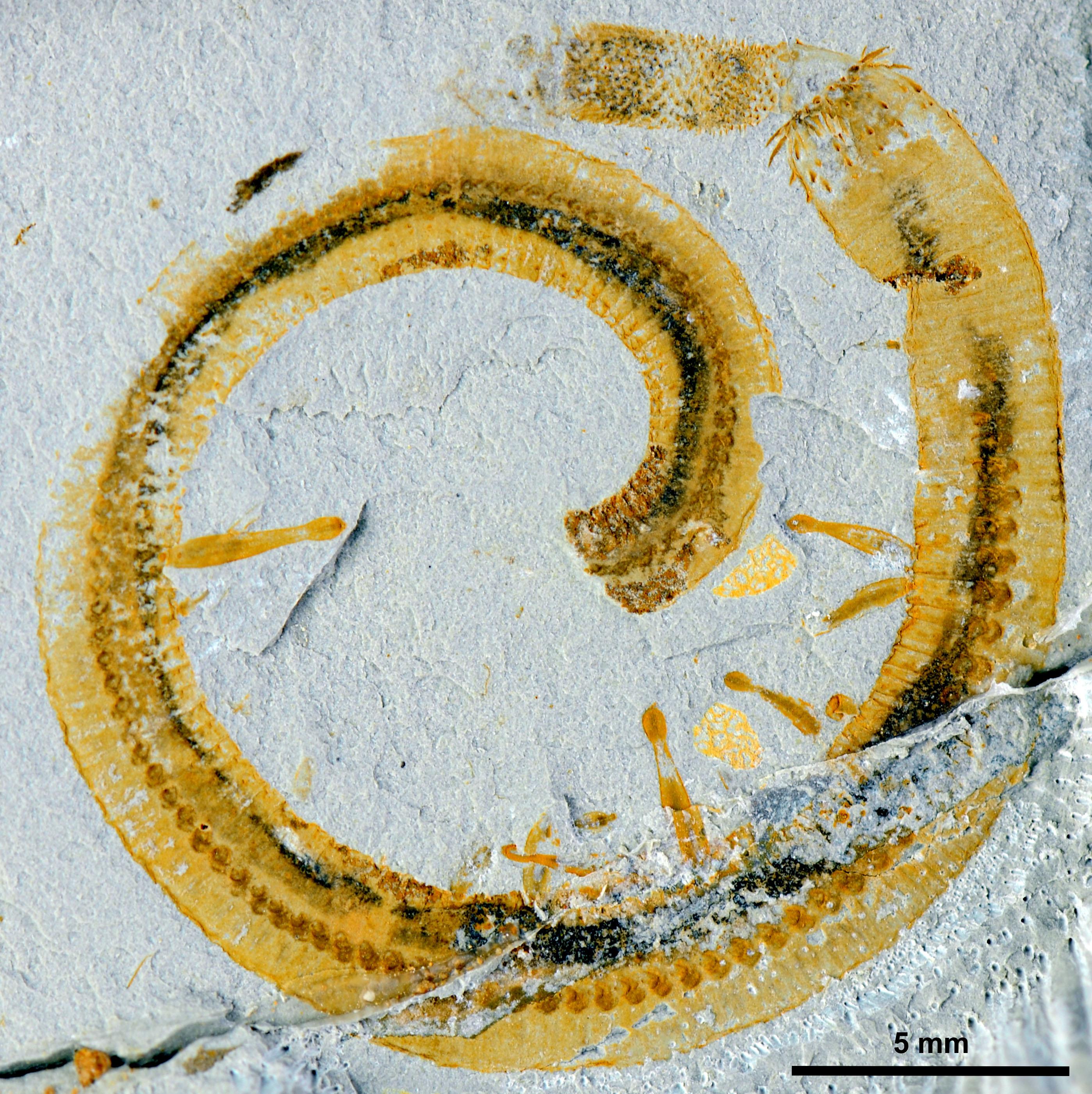 paraziták a szimbiózisban