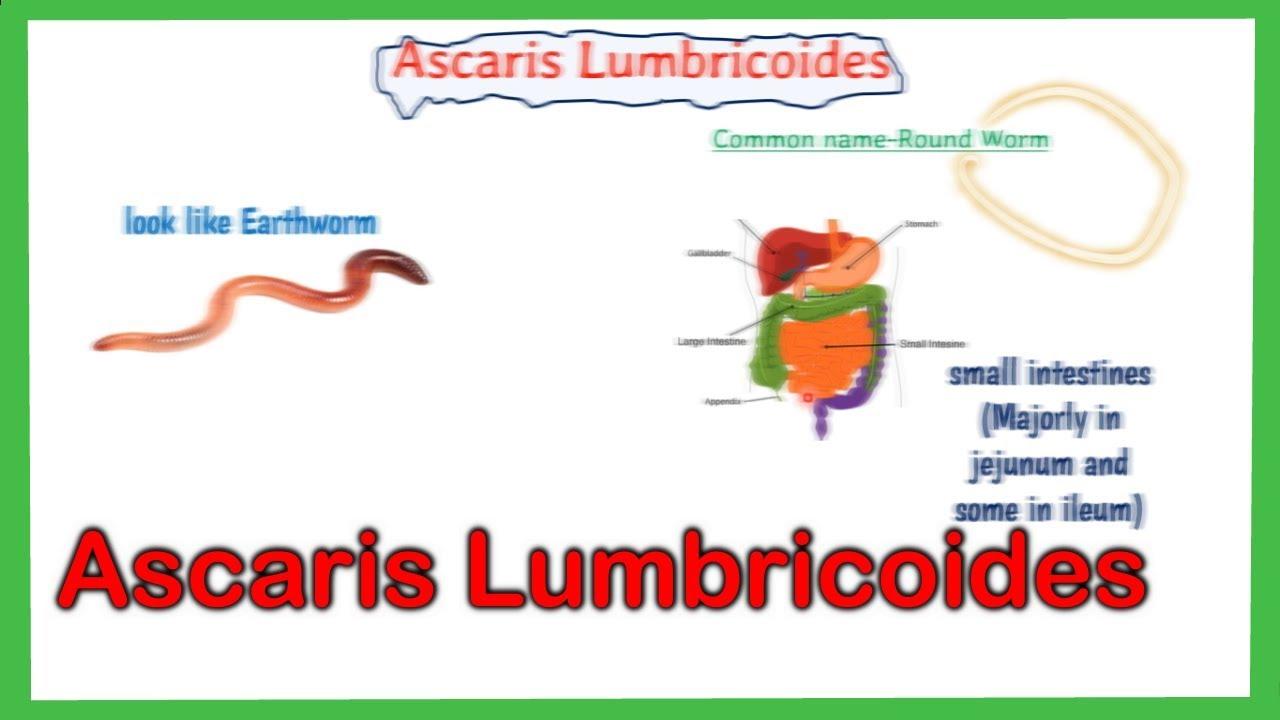 ascariasis leggyakrabban lehetséges