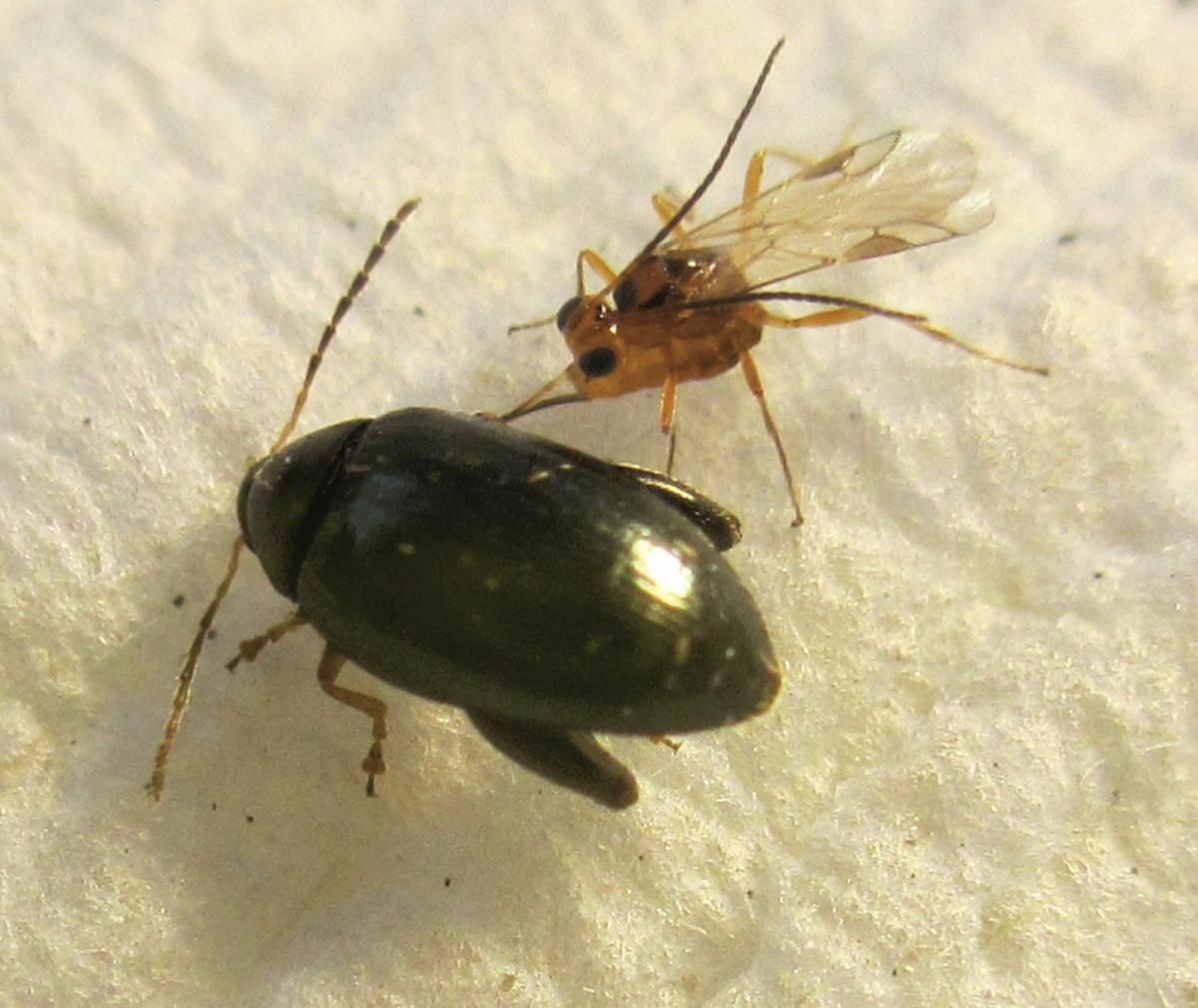 paraziták mutánsai gyógyszerek a lamblia parazitáihoz