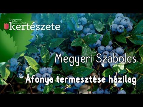 áfonya parazitáktól)