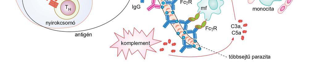 Pozitív féreg antitest - Parazita kezelési rendszer