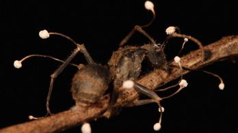 Szörnyű vége lett az álomnyaralásnak, miután egy parazita mászott a péniszébe | hu