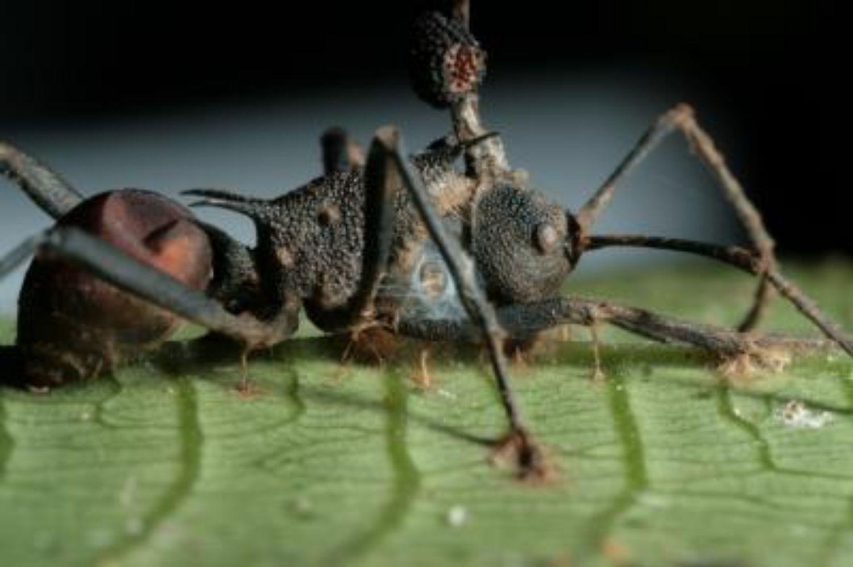 paraziták megfulladnak bőrparaziták gyógynövényes kezelés