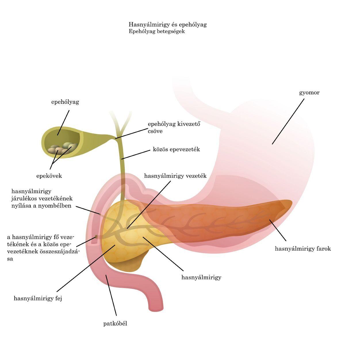 Parazita kezelés és táplálás - Bélférgesség tünetei és kezelése a gyerekeknél