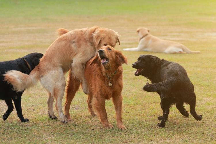 Miért büdös a kutyám? - 11 lehetséges ok