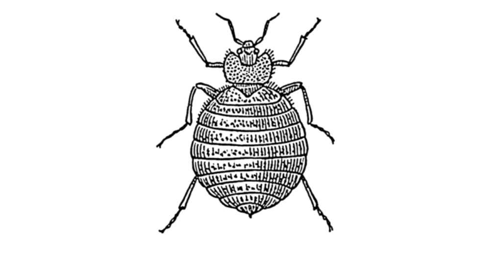 parazita ellenőrzés