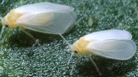 Ezeket a rovarokat utáljuk a legjobban - HáziPatika