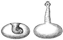 foltok és galandférgek életciklusa
