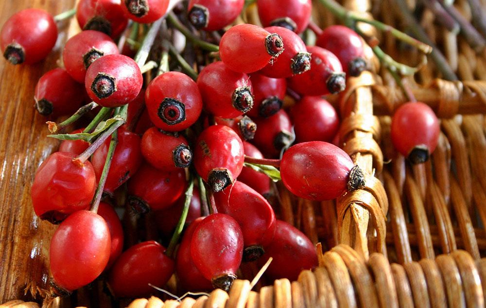 Csipkebogyó g Természetes C-vitamin utánpótlást biztosít. - Quebeck - ZooCity webáruház