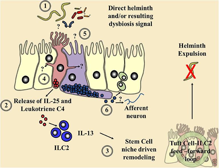 bőrparaziták és kezelésük a bél és a rossz lehelet kezelése
