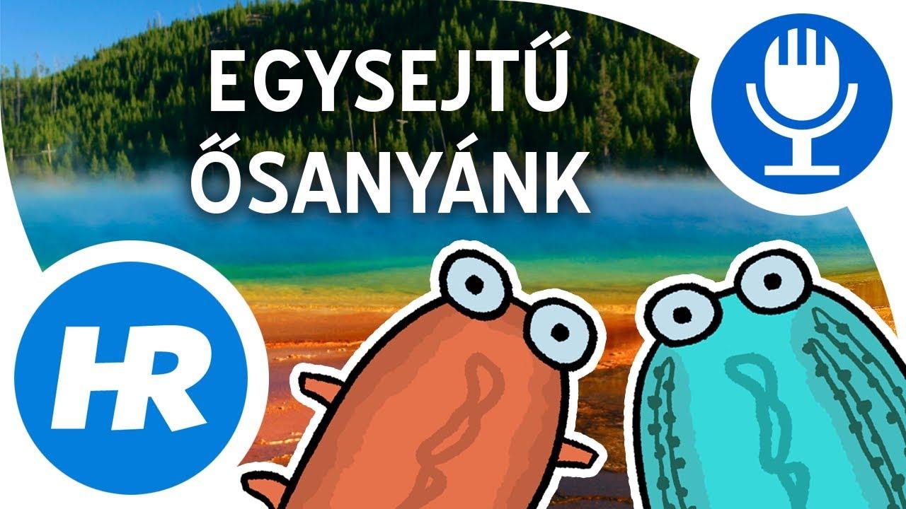 szakma parazita elvtelen)