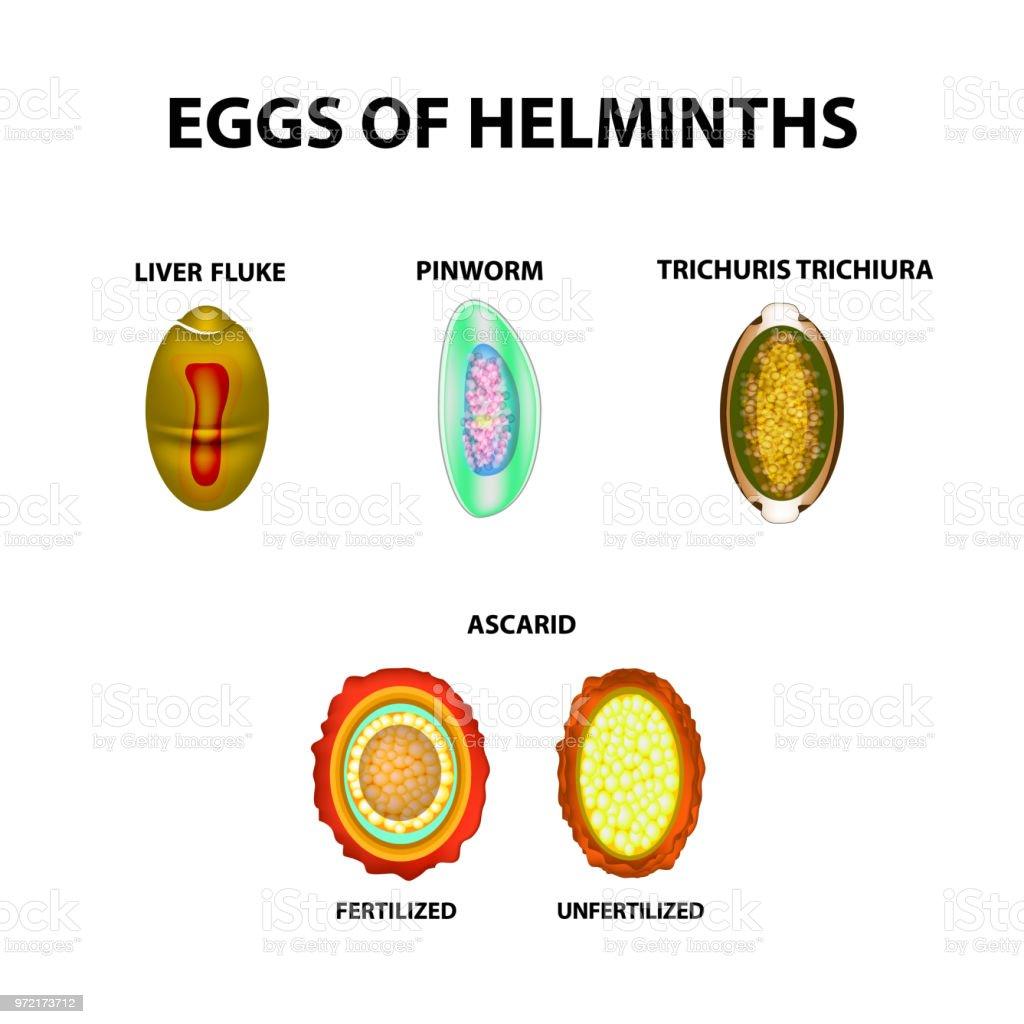 helminthiasis következményei)