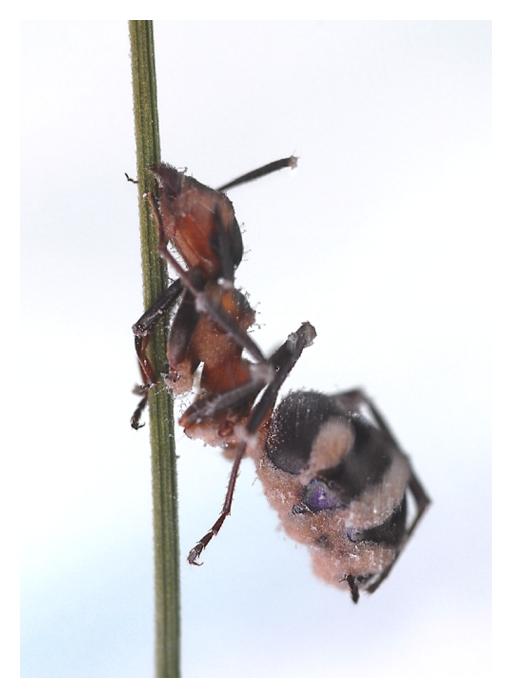 exo endo paraziták