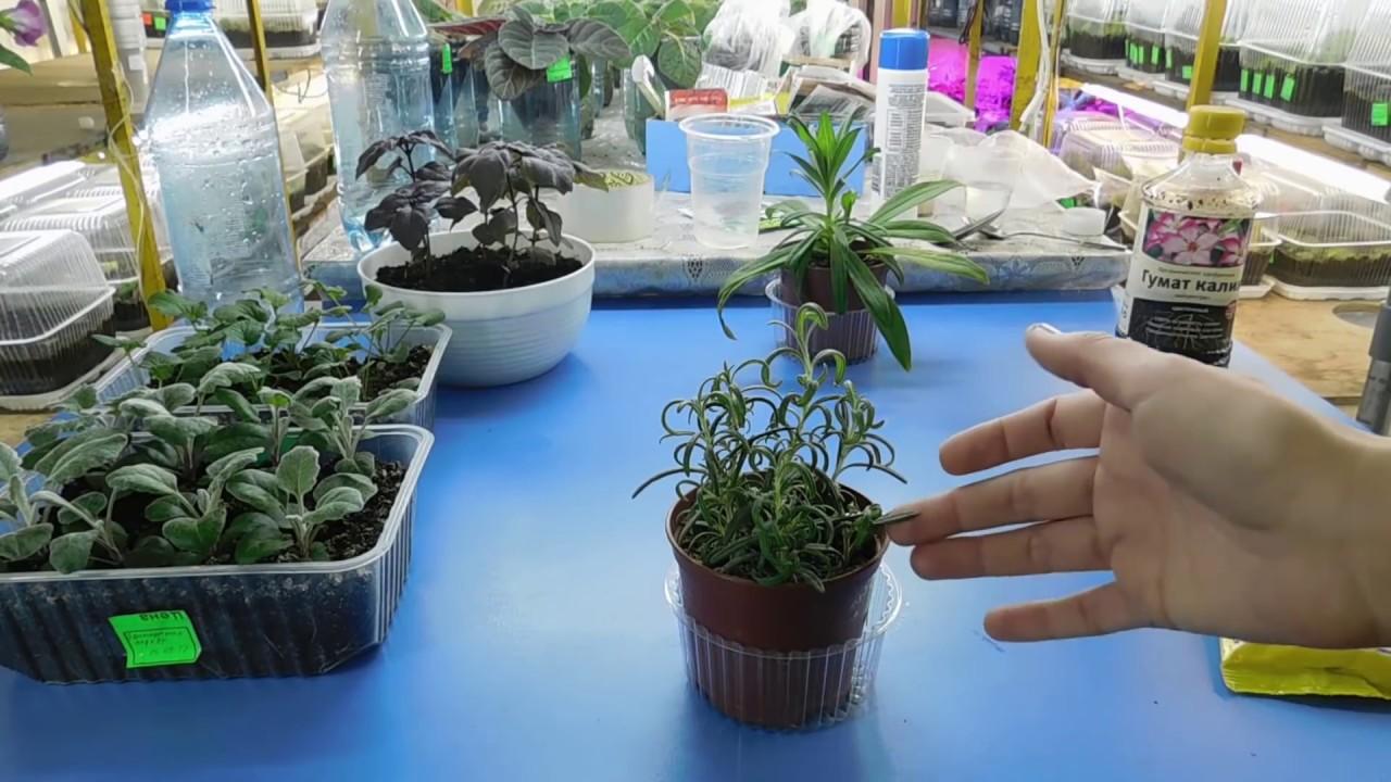 hogyan lehet megszabadulni a parazitáktól egy virágcserépben)