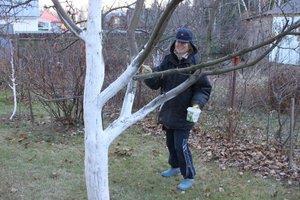 a fa károsítók elleni küzdelem eszköze
