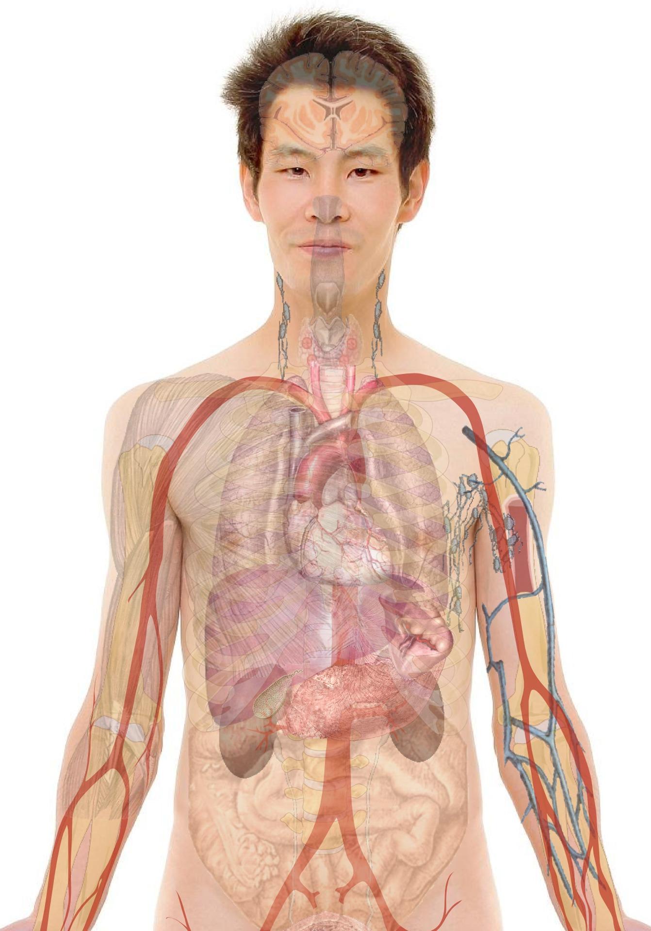 a paraziták előnyei a testben