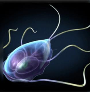 a paraziták testben való jelenlétének első jelei