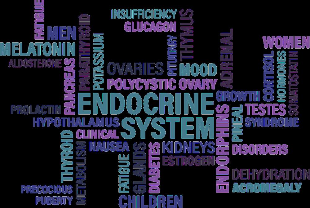 endokrin rendszer és paraziták)