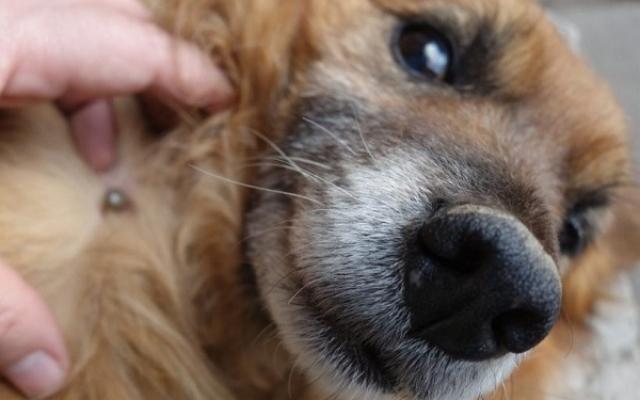 A külső és belső kutya paraziták elleni védekezés és kezelésük | talea-immobilien.hu Online férfimagazin