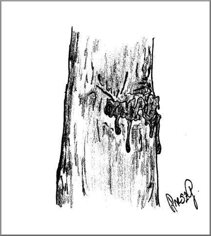 a fa károsítók elleni küzdelem eszköze)