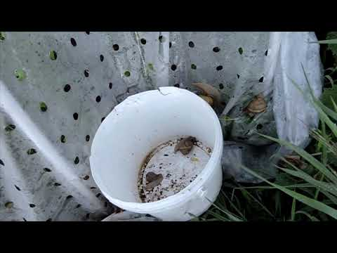 retek a parazitáktól, hogyan kell szedni élhetnek- e paraziták a tüdőben