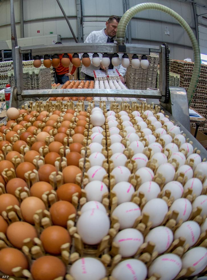 gömbölyű tojáshéj