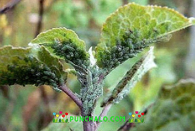 Lemosó permetezés - Fontos, ki ne hagyd! (Szerek ban) - Növényvédelem - Növénydoktor
