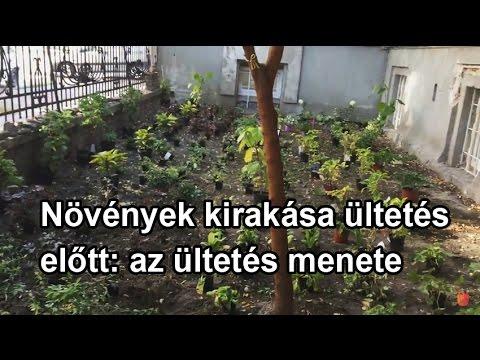 féregparaziták példái)