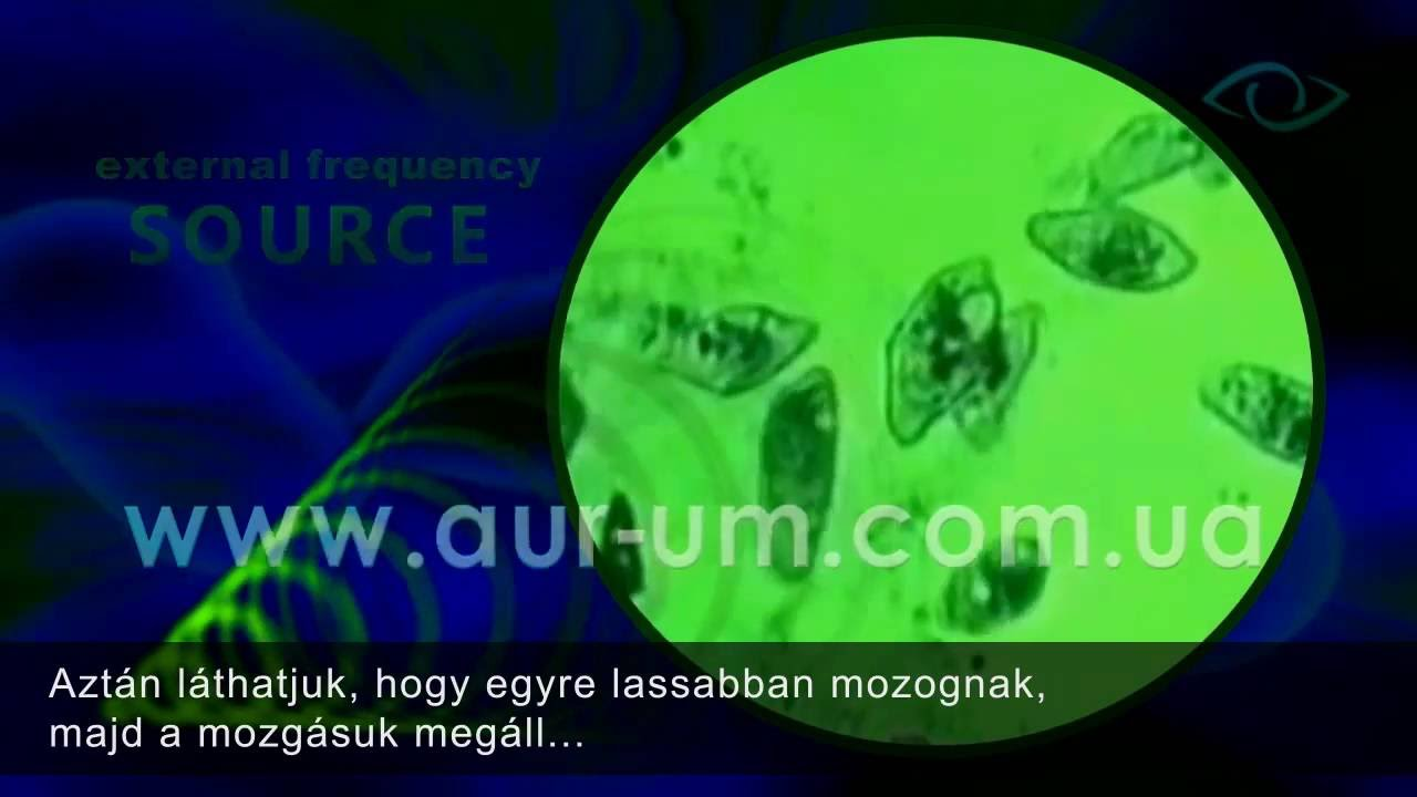 mustang parazita orvoslás