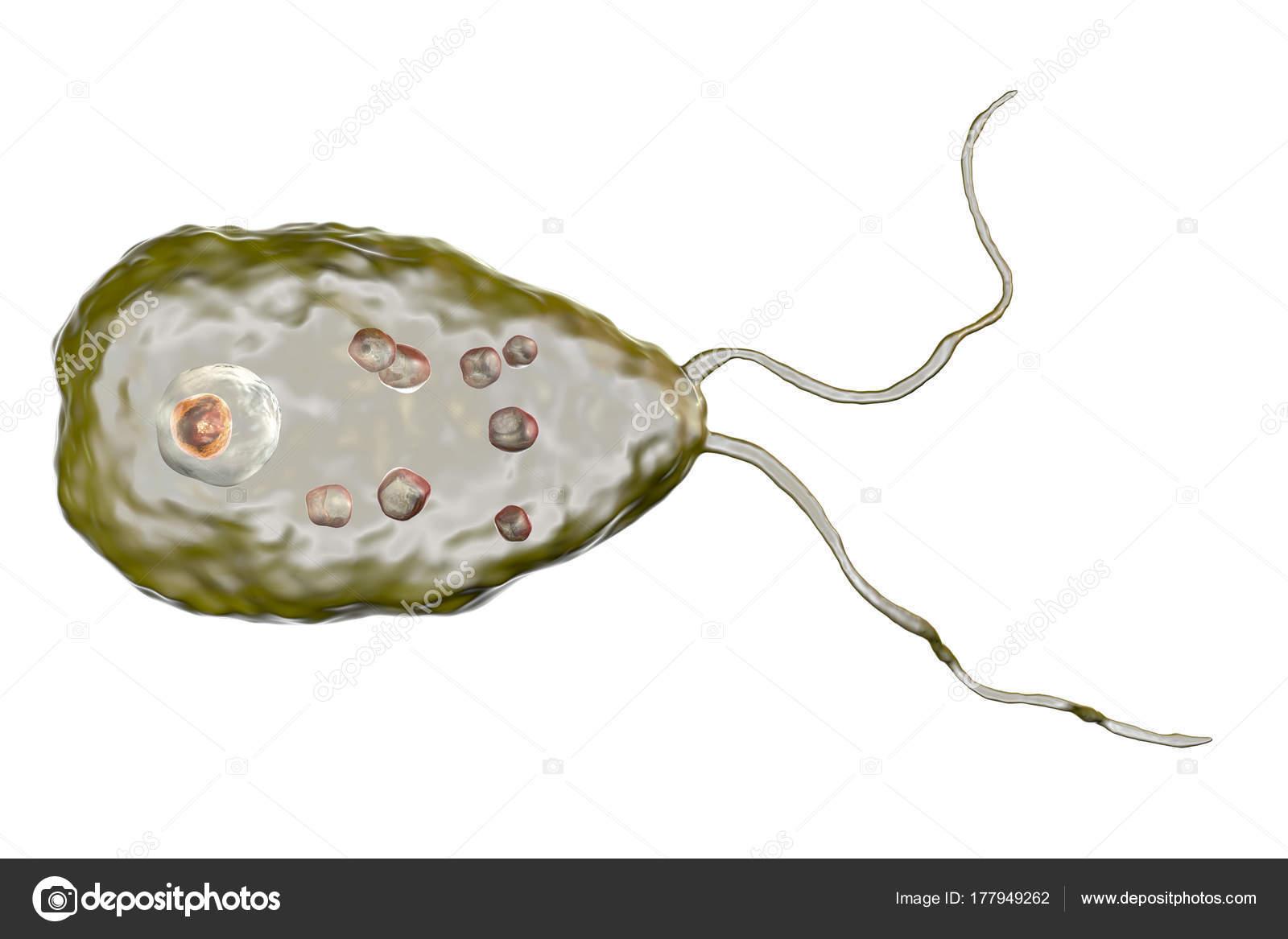 nigleria parazita mit kell venni a belekben lévő parazitáktól