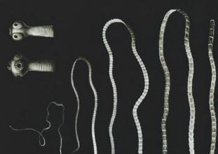 parazita gazda változás jelenség milyen paraziták élnek a szem kezelésében