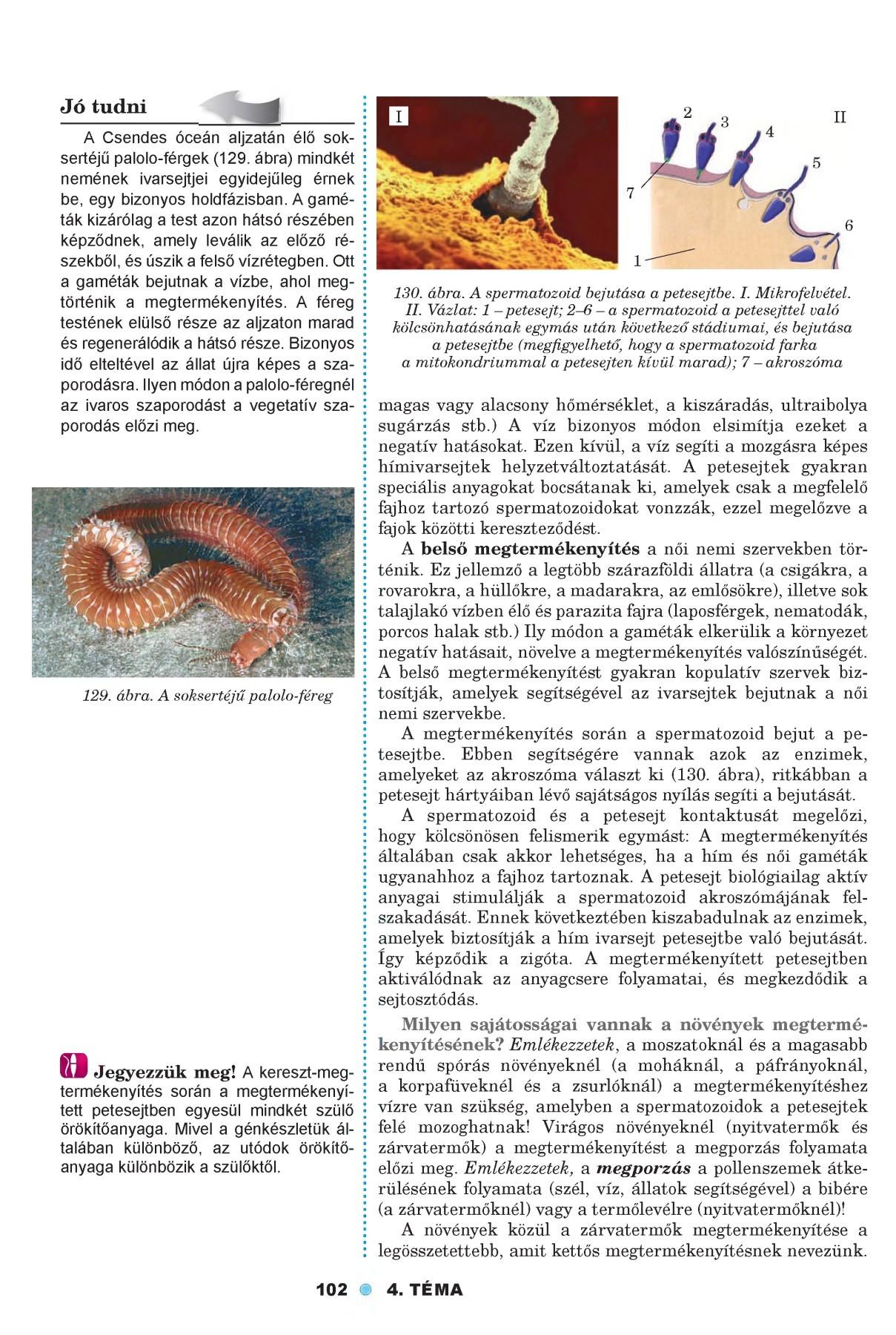 petesejtek és paraziták felnőttei)